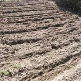 『20日ぶりの貸し農園(市民農園)の様子と、柿狩り』の画像