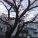 昼休み 桜🌸