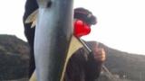 31歳ハゲのワイが防波堤から釣りした結果www(※画像あり)