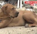 体長1m 土佐犬が逃走中 広島市安佐北区