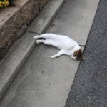 道路で寝てる人を轢いてしまった・・・これって寝てる人が悪いよね?