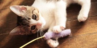 うちの猫はほとんど地上にいるからキャットウォークは作らなかった。その代わり…