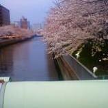 『春爛漫』の画像