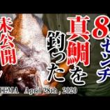 『83cm真鯛を釣った時の未公開シーンをアップ』の画像