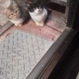 今までの招き猫の写真