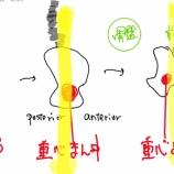 『股関節③:骨盤の運動と前傾姿勢、股関節屈曲の関係性』の画像