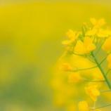 『4月はあえての「平常心」』の画像