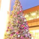 『う、クリスマスツリーだ!』の画像