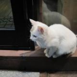 子猫が子猫を育てる?  2013/06/02の写真