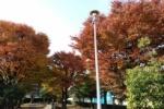 交野市内のいろんなところの紅葉具合を見てきた!〜星のブランコも今がいい感じ〜