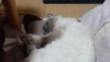 ワイの猫が寝てるから暇なやつ見てってや(※画像あり)