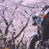 『桜開花』の画像