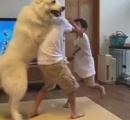 兄弟喧嘩を仲裁する犬がネットでかなり話題