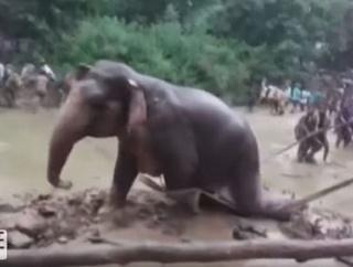 チカラを合わせればできる。愛と信仰心が成功させた象の救出劇