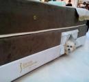 【画像】ペットと一緒に快適に寝れる画期的なベッドが登場 デブ飼主の寝返りで潰されるネコが減りそう
