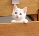 【画像】眉毛が八の字の子猫が見つかる(´・ω・`)