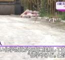 ジョギング中に石灰の水たまりで「化学やけど」 川崎市