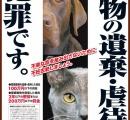 一軒家で猫238匹保護 多頭飼育崩壊か