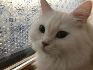 動画:17歳の高齢猫といやしい隊