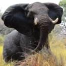 これもサファリの醍醐味なのか?アフリカゾウに「あっちに行け!」と怒られてしまったツアー客