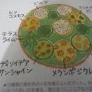 ファンヒーター付けちゃった&メランポジウムの花