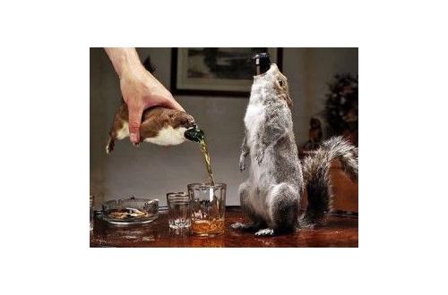 高い酒で打線組んだ結果wwwwwwwwwwwwwwwwwwwwwwwのサムネイル画像