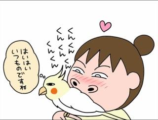 鳥さんはいい匂い(オカメインコ)