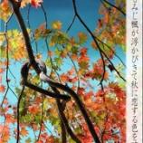 『秋に恋する色』の画像