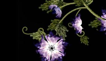 花だと思った人間だったw 息をのむほど美しい不思議な人間フラワー画像!