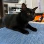 我が家の黒猫写真 スミちゃんを狙うアヤちゃんなど