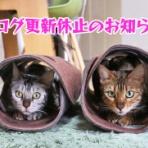 ベンガル猫ブログ ねこちん!猫とオッサンの賃貸生活