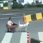 【動画】中国、イヌ馬車の乗って颯爽とドヤ顔で疾走する少年に痛恨の悲劇が訪れる!