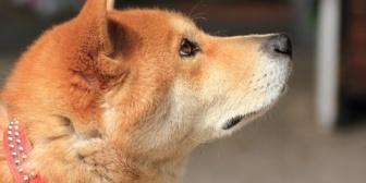 飼い犬が知らん人からストレートにくれと要求されたり誘拐されかけたことまである。確かに愛嬌あって可愛い子だけどさ…