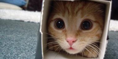 猫って死ぬほどかわいい