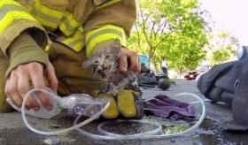 消防士が 火事跡の家から 猫を助ける映像。     海外の反応。