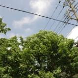 『2006年5月』の画像