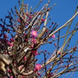 『1月の庭の花;東大和市』の画像