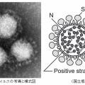 新型コロナウイルスの原因は「兵器用ウイルス」?それとも「無神論」?