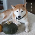 収穫の秋♪