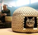 猫用ゆりかごが大人気、わらで手作り(画像あり)