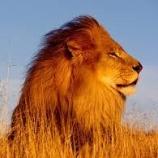 『NO17のライオン』の画像