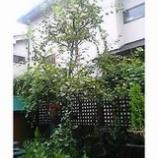 『台風7号・8号』の画像