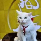 『【ネコ】17才の現役女優猫「あなご」 2月に初主演ドラマの放送決定』の画像