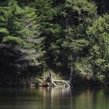 『鎮守の森の精神』の画像