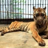『死の動物園閉鎖を求めて』の画像