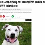 『英国で一番孤独な犬に里親が見つかる』の画像