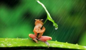 【画像】カエルの可愛さは異常!この可愛さ分かる奴いる?