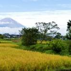 富士山トンボ池通信