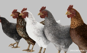 Varied Chickens