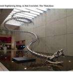 【画像】約6000年前に実在してた15m級の古代のヘビがデカすぎる